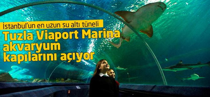 Tuzla Viaport Marina Akvaryum Haziran'da Kapılarını Açıyor