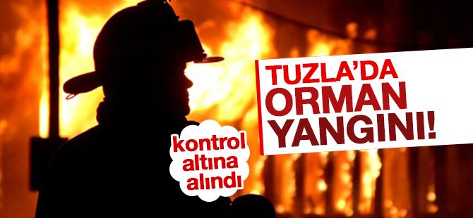 Tuzla'daki Orman Yangınıda İki dönüm alan zarar gördü