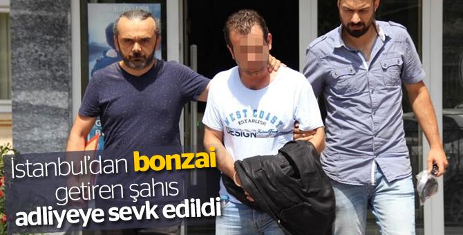 İstanbul'dan bonzai getiren şahıs adliyeye sevk edildi