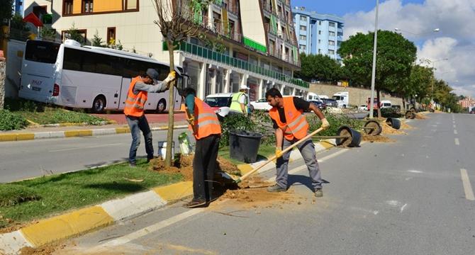 Pendik'e Dikilen Ağaç Sayısı 10 Bini Geçecek