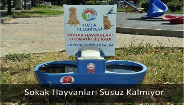 Sokak Hayvanları Susuz Kalmıyor