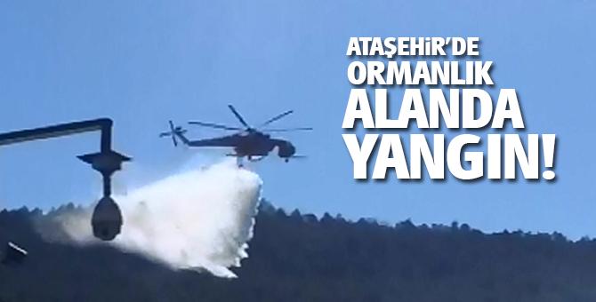 Ataşehir'de ormanlık alanda yangın!