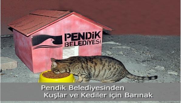 Pendik Belediyesinden Kuşlar ve Kediler için Barınak