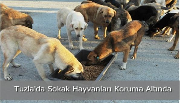 Tuzla´da Sokak Hayvanları Koruma Altında