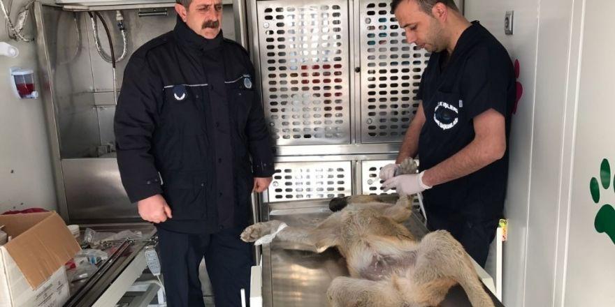 Mafya hesaplaşması İstanbul'dan Dubai'ye uzadı