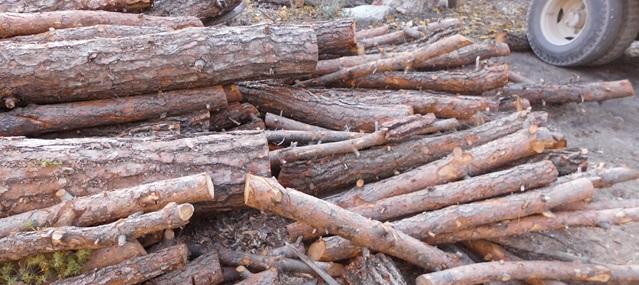 Kağıttan vazgeçince 10 bin ağaç kurtuldu