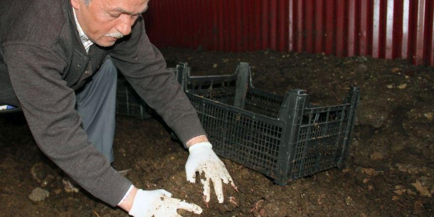 120 bin solucanla başladı bugün 15 milyon solucanı ile organik gübre üretiyor
