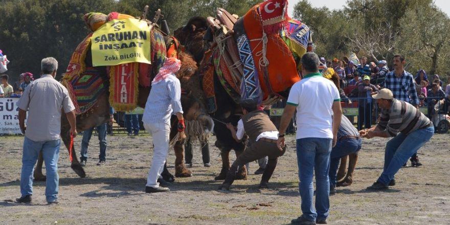 Çakmaklı 5. geleneksel deve güreşleri yapıldı