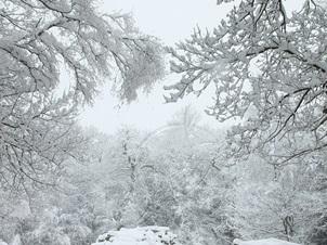 İstanbul'da Kar Alarmı! İlk Kar Yağmaya Başladı