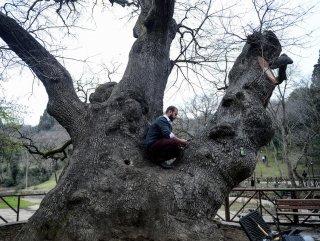 Yaşlı Ağaçların Tomografisi Çekildi