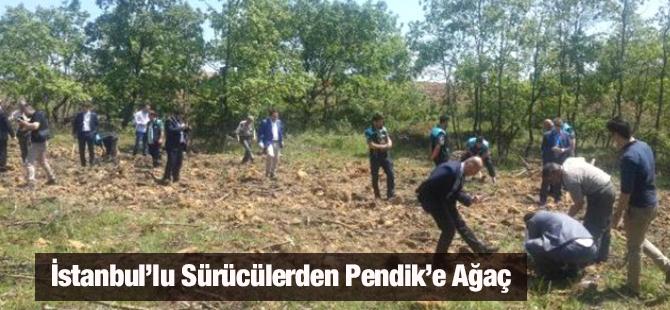 İstanbul'lu Sürücülerden Pendik'e Ağaç