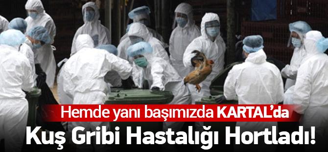 İstanbul'da Kuş Gribi Alarmı