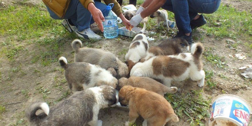 Sokağa atılan yavru köpeklere vatandaşlar sahip çıktı