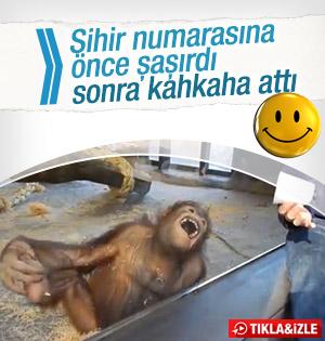 Sihir Numarası Orangutanı Önce Şaşırttı! Sonra Güldürdü