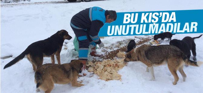 Sahipsiz Sokak Hayvanları Bu Kış'da Pendik'te Unutulmadı