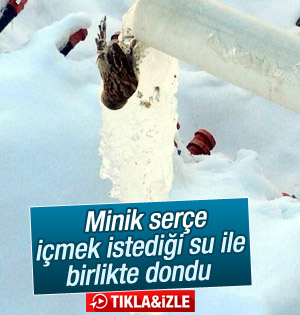 Minik Serçe suyla birlikte dondu