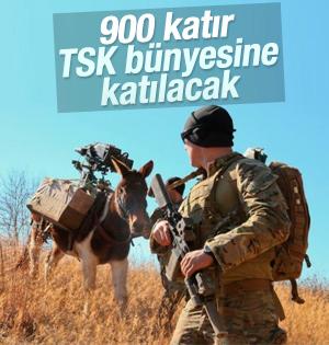 TSK'ya 900 katır alınacak