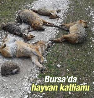 Bursa'da hayvanları katlettiler