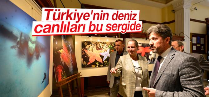 Türkiye'nin Deniz Canlıları Bu Sergide