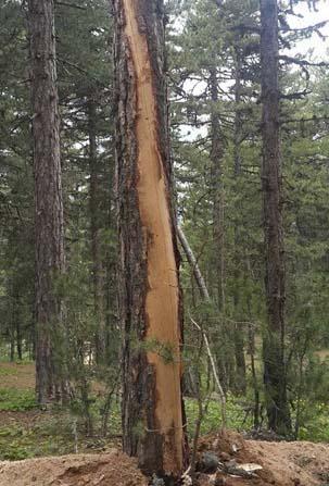 22 kişilik grubun yakınındaki ağaca düşen yıldırım korkuttu
