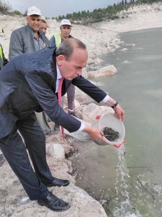 Çavdarhisar Sulama Barajına pullu sazan bırakıldı